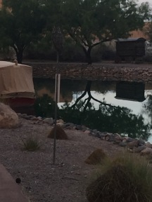 Great horned owl sitting on sign in front of water feature with desert landscaping.