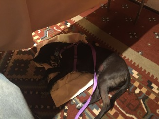 Small black dog napping on a canvas bag under a table during a law seminar.